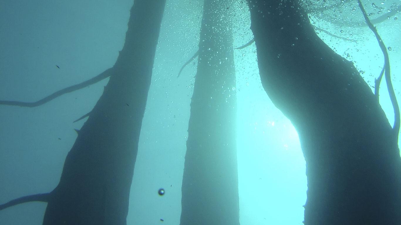 Bäume unter Wasser