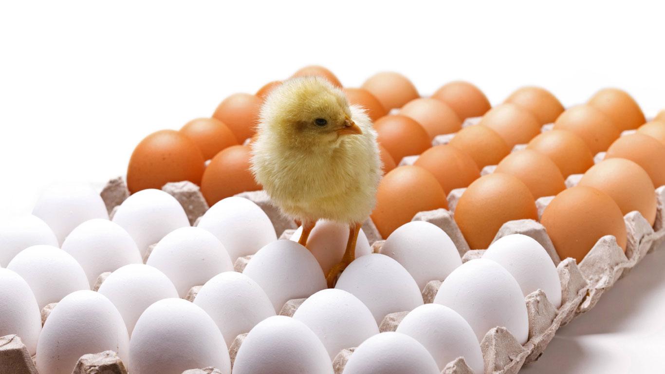 Braune Oder Weiße Eier