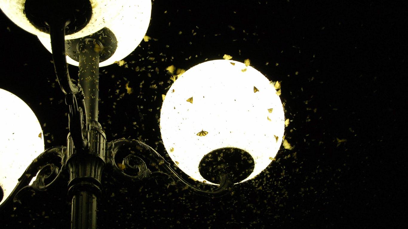 Warum lieben Motten nachts das Licht, sind tagsüber aber kaum zu ...