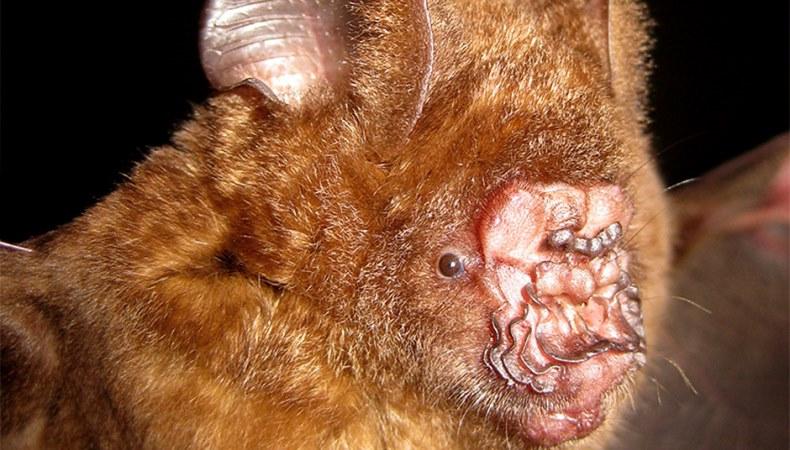 Nachschwärmer mit Nasenradar