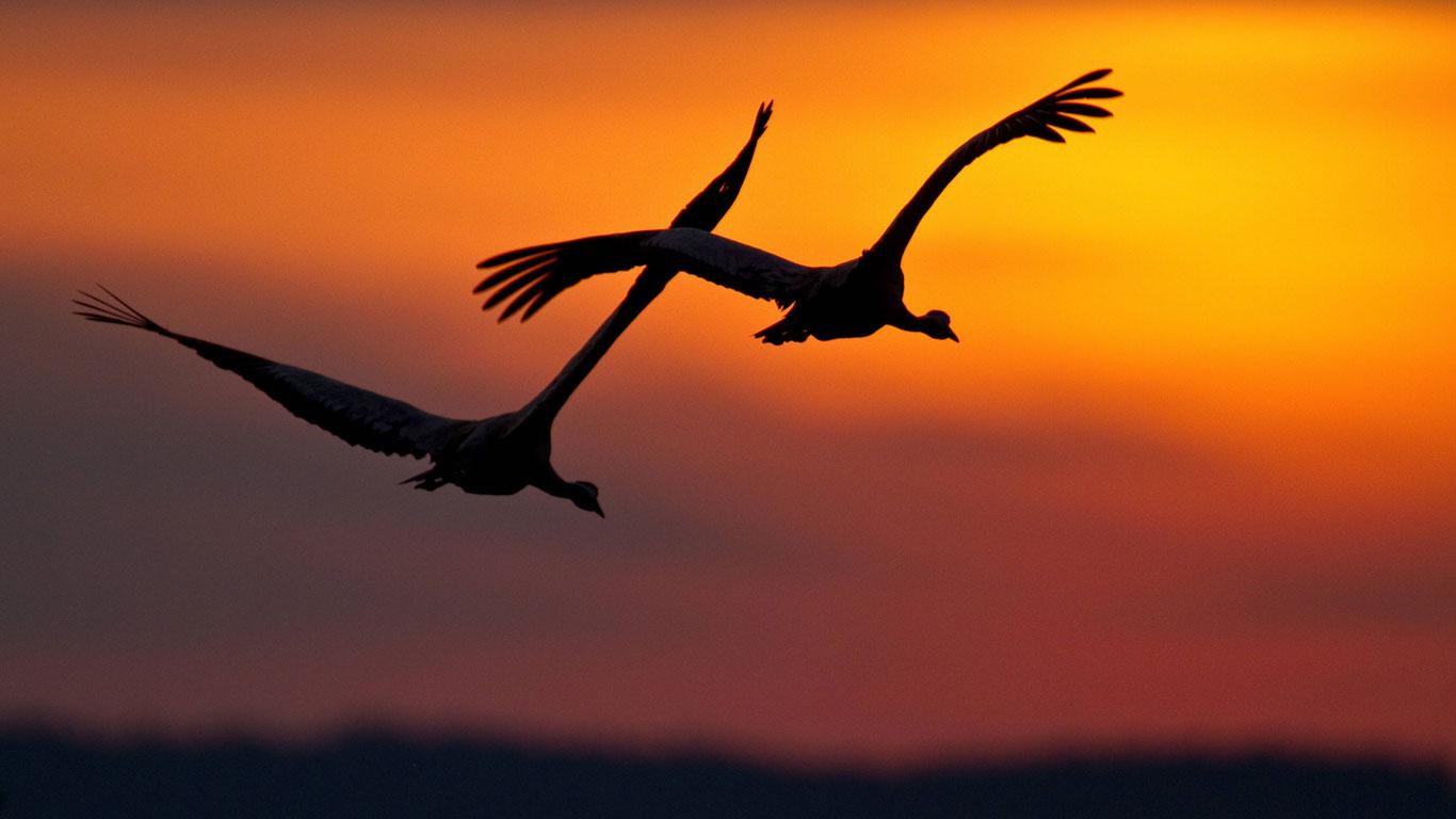 Der Frühling der Zugvögel