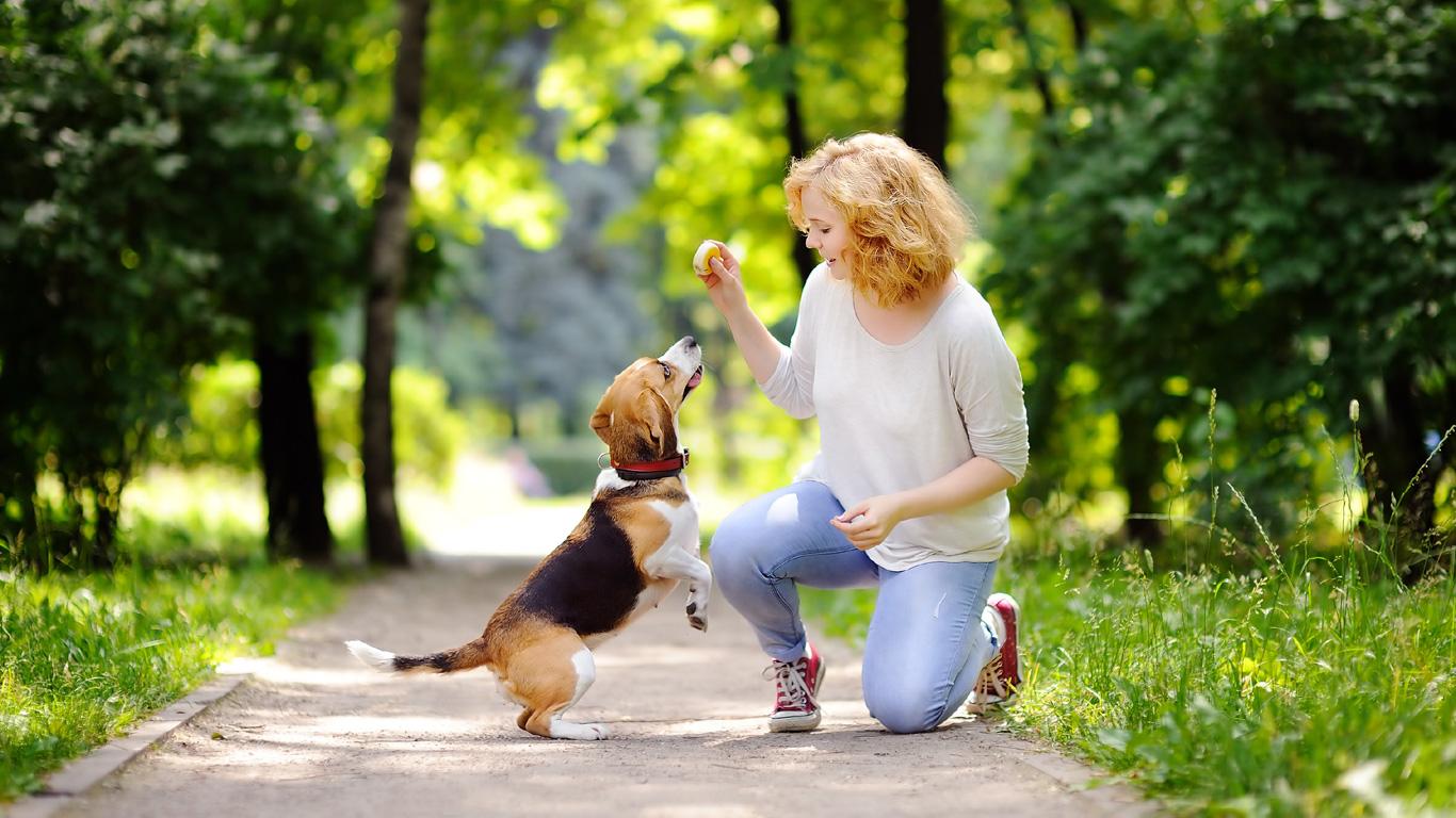 Ein Leben mit Hund?