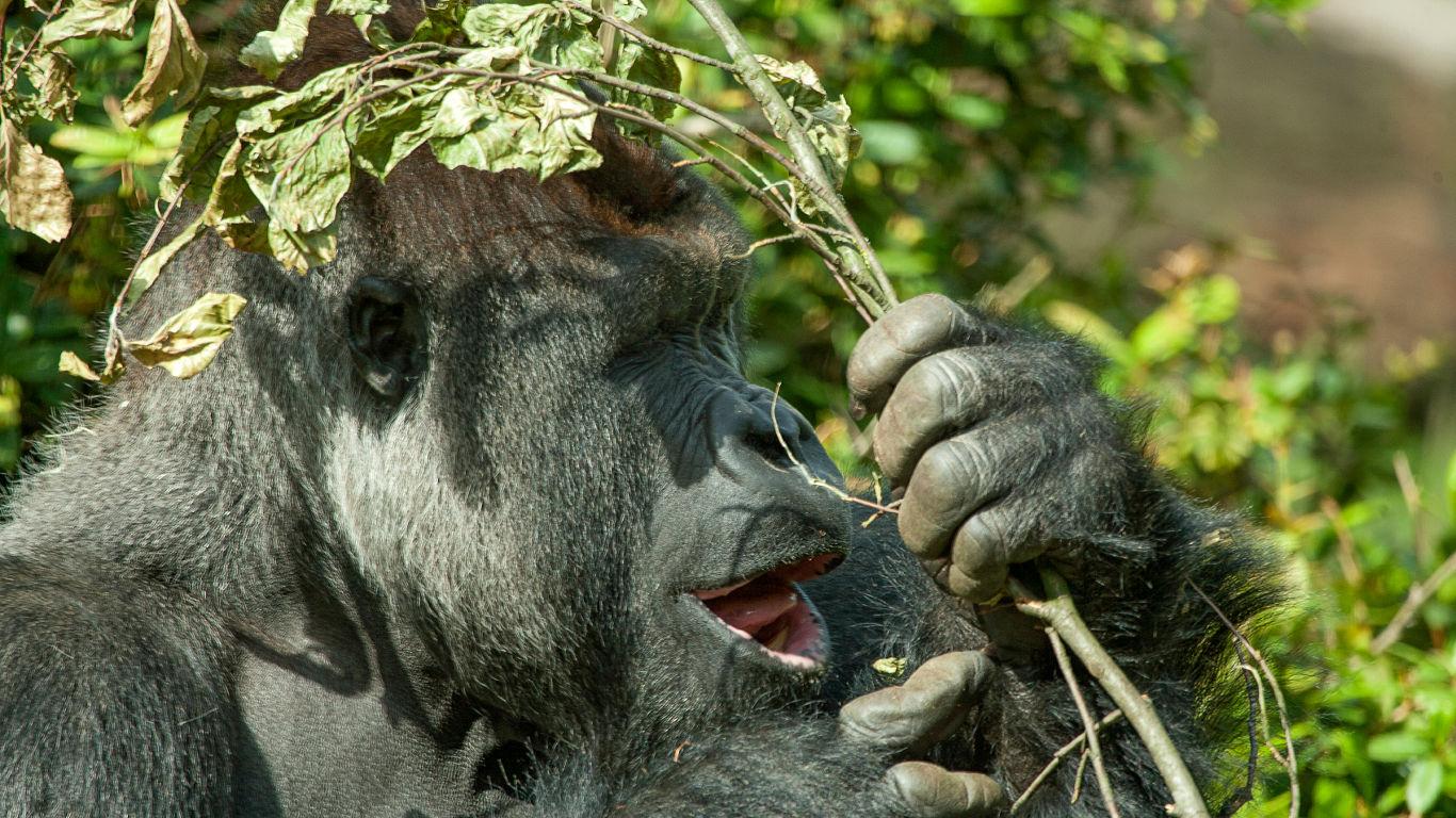 Wie sieht es im Tierreich aus?