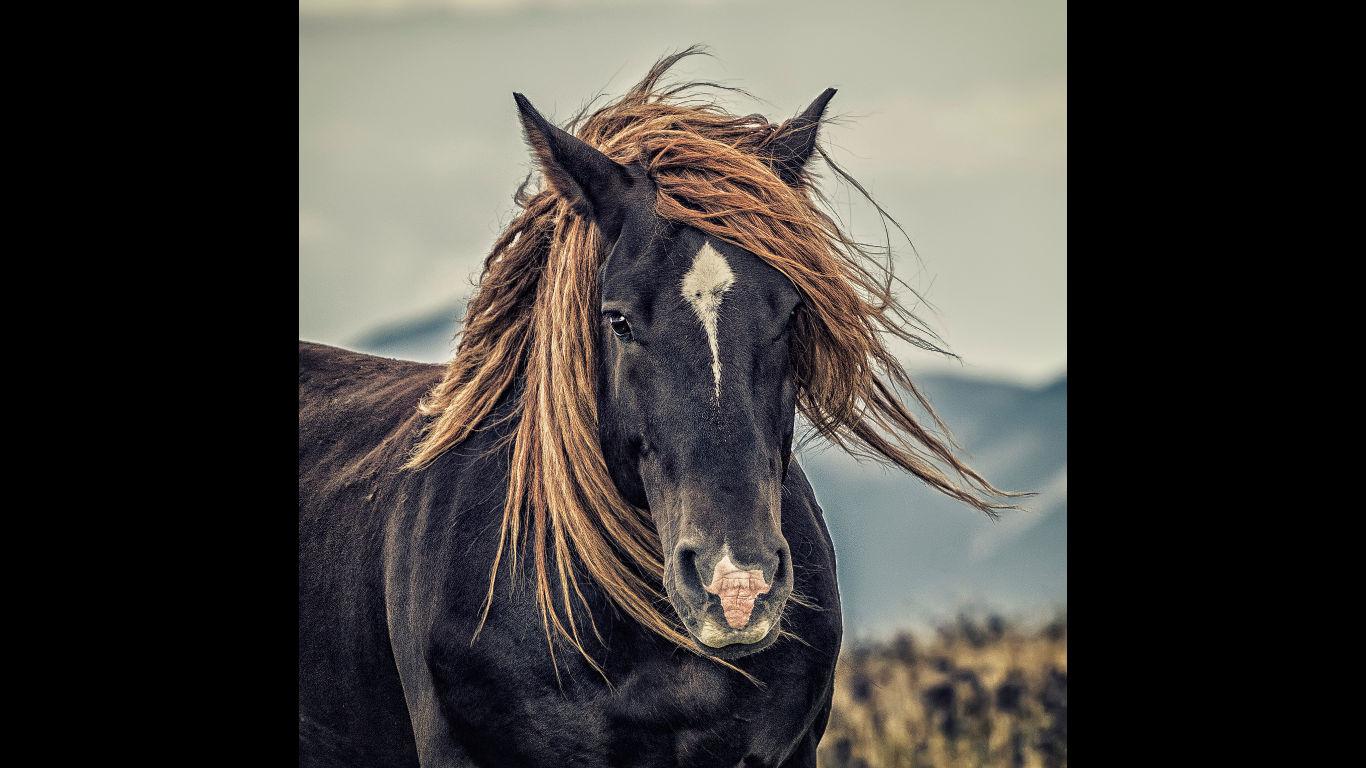 Was das Haar verrät