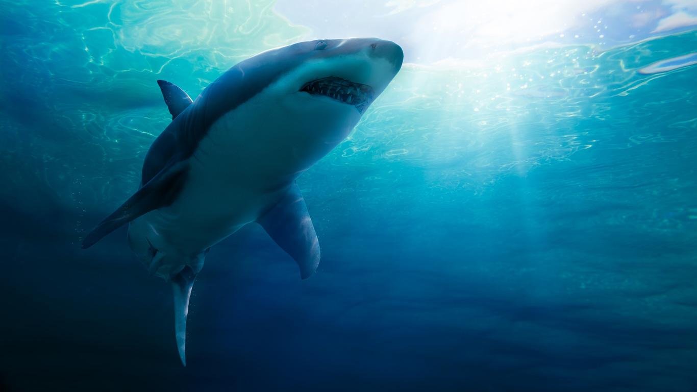 Selfies sind tödlicher als Haiangriffe