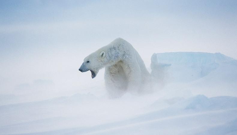 Mit dem Eisbären auf Neuland