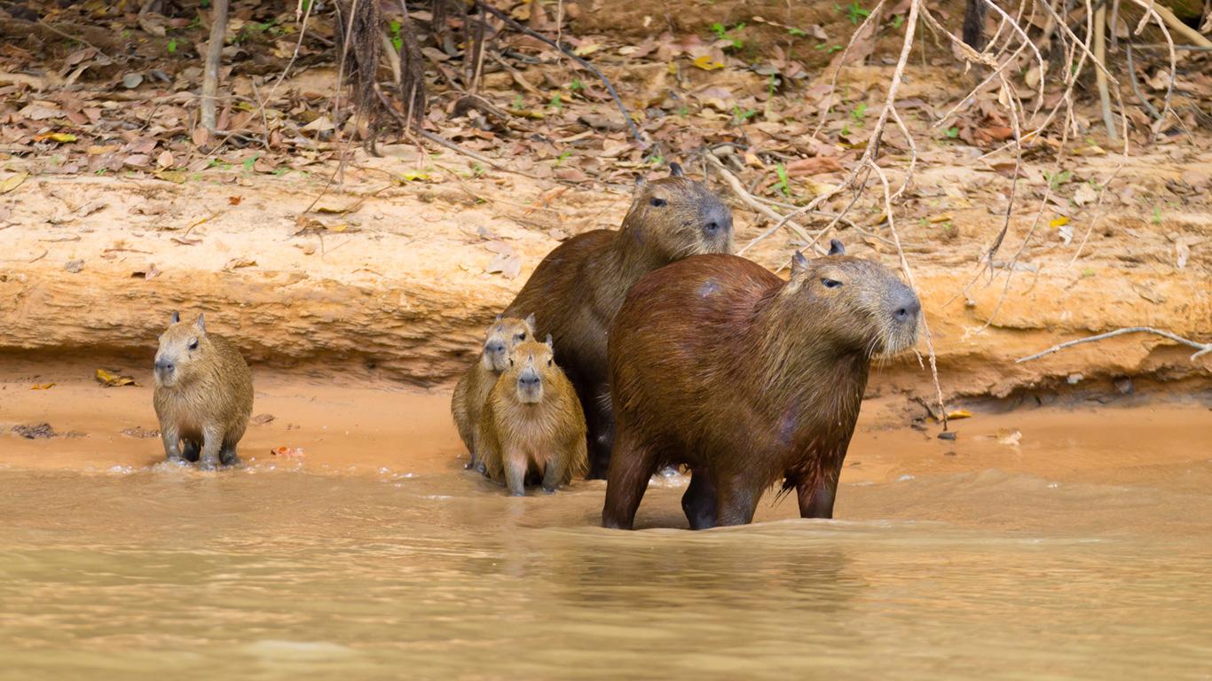Gemächliche Sumpfbewohner