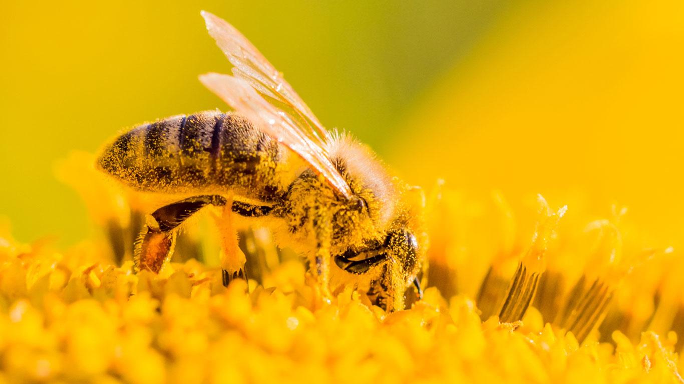 Was unterscheidet einen Wespenstich von Hornissen- und Bienenstichen?