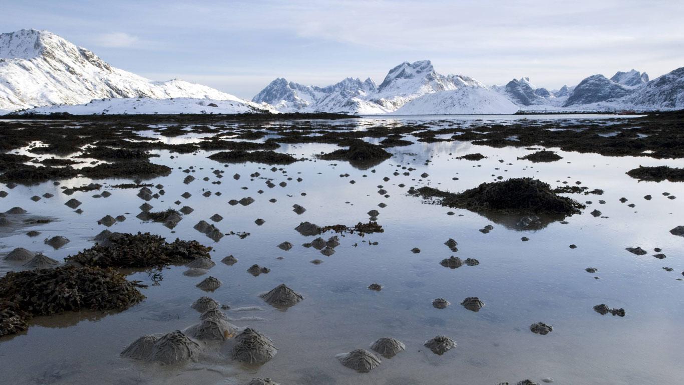 Der Wattwurm: Unermüdliches Umpflügen des Wattenmeeres