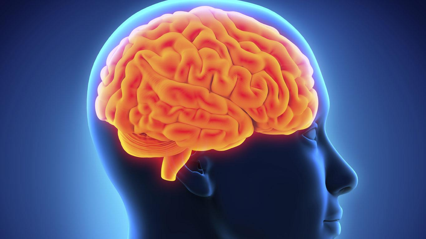 Menschen benutzen nur zehn Prozent ihres Gehirns