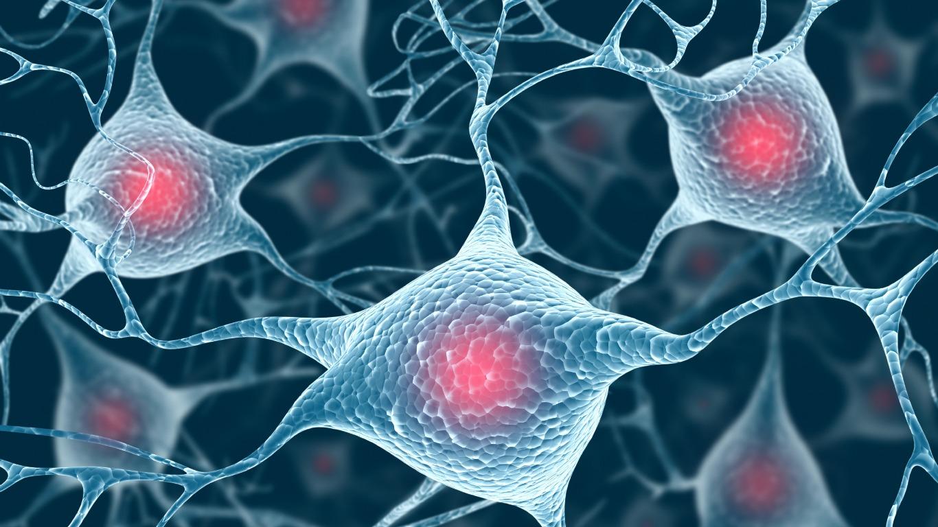Das Gehirn besteht größtenteils aus Nervenzellen