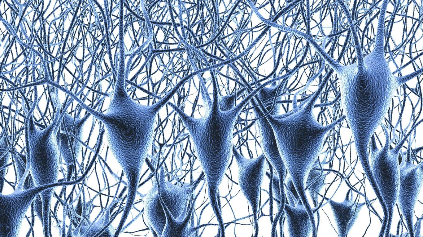 Wir haben 100 Milliarden Gehirnzellen