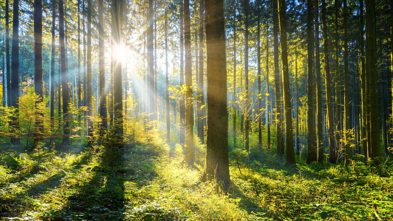 Flüssigholz ein etwas anderer Biowerkstoff