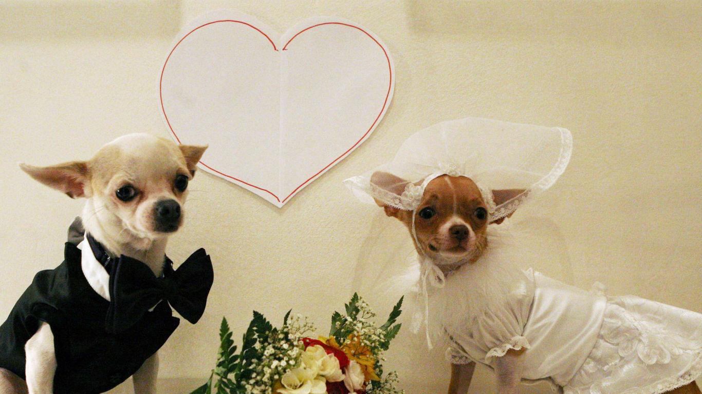 Hunde-Hochzeit: Wuff-Sagen mit Stil