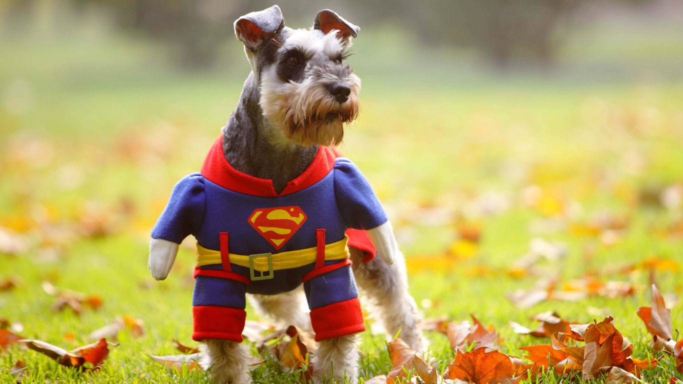 Blickfang auf der Pinkel-Wiese: Superdog