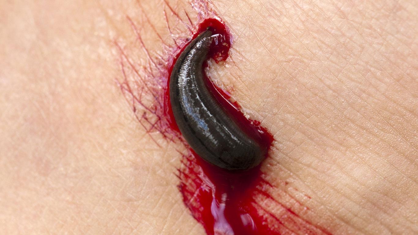 Reines Blut durch heilenden Speichel