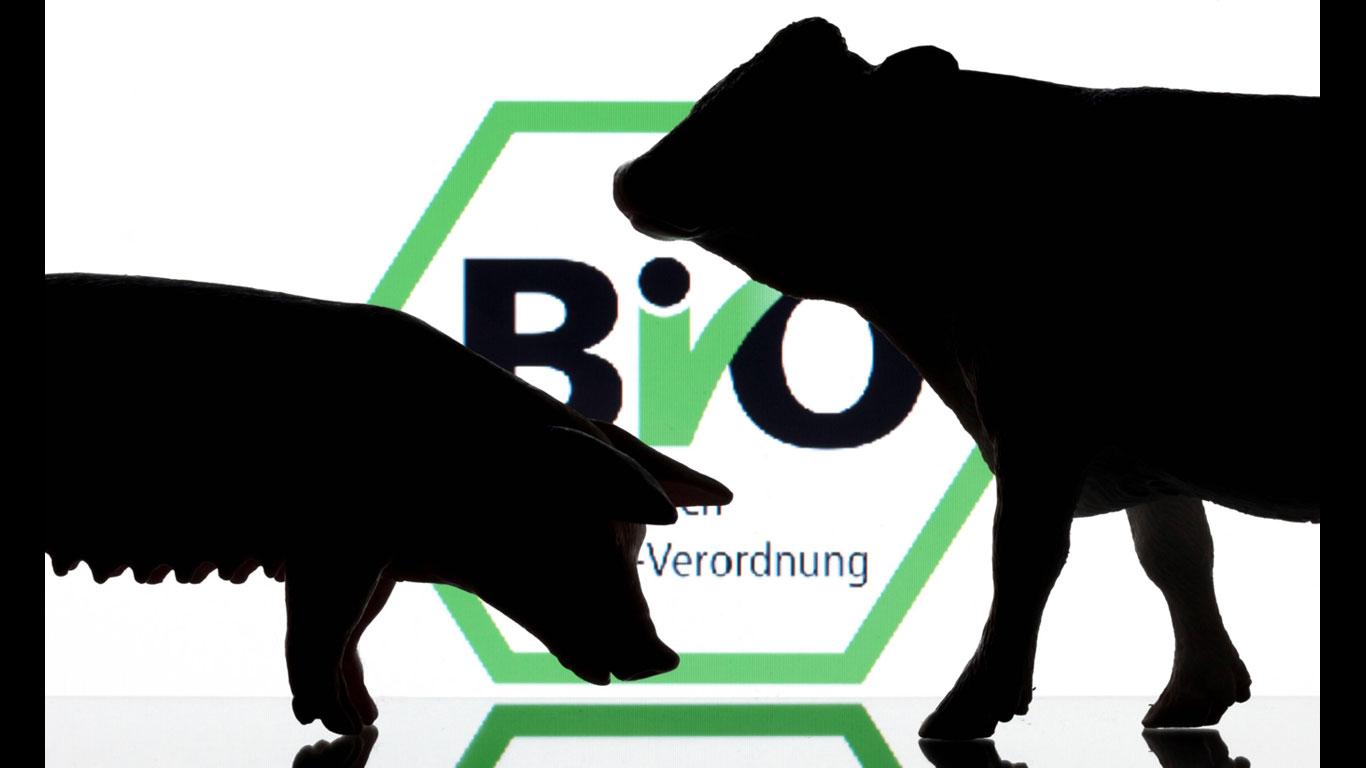 Mehr Antibiotika in der Tierzucht als in Kliniken