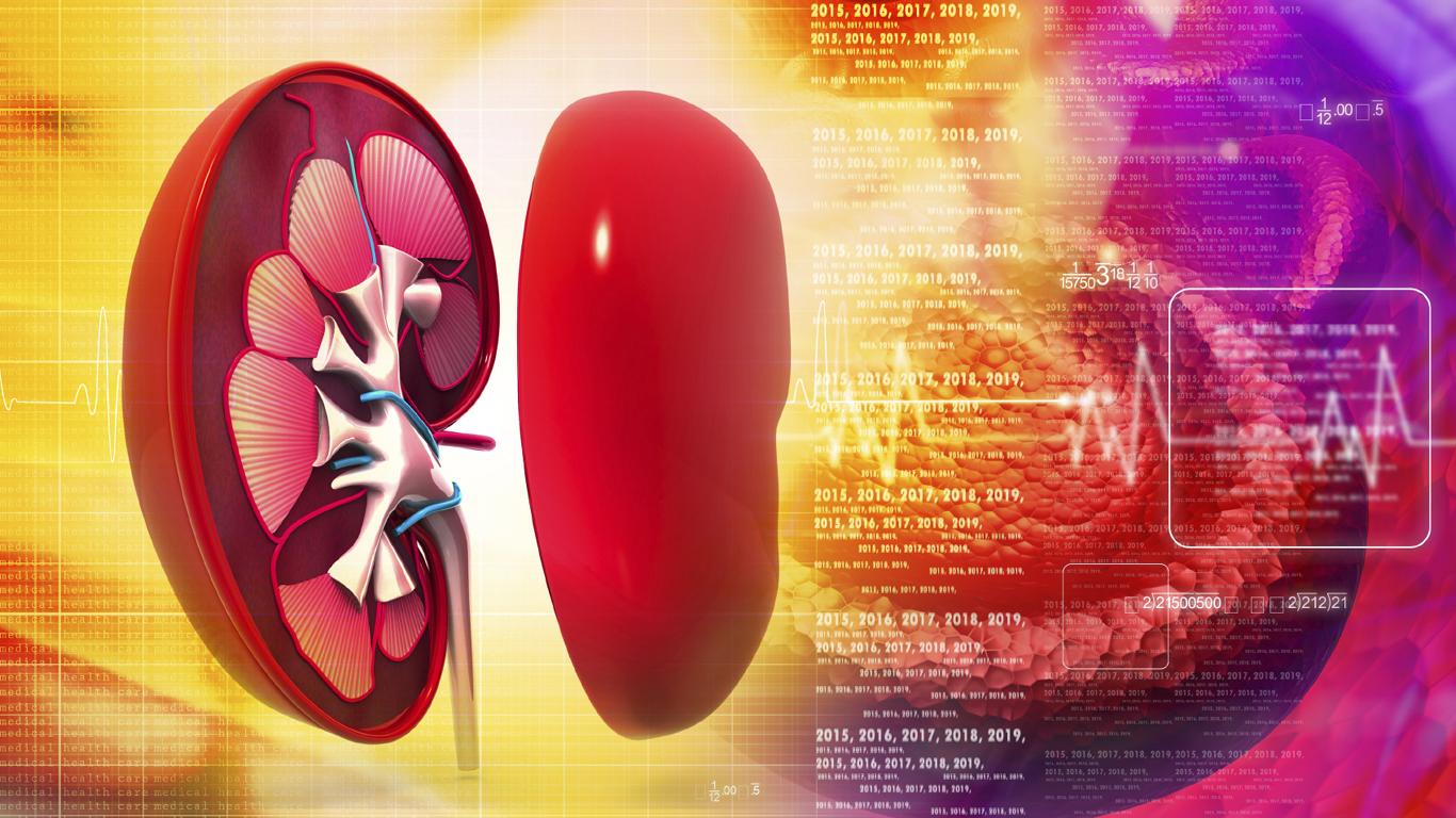 Wie lange kann die Niere ohne Wasser arbeiten?