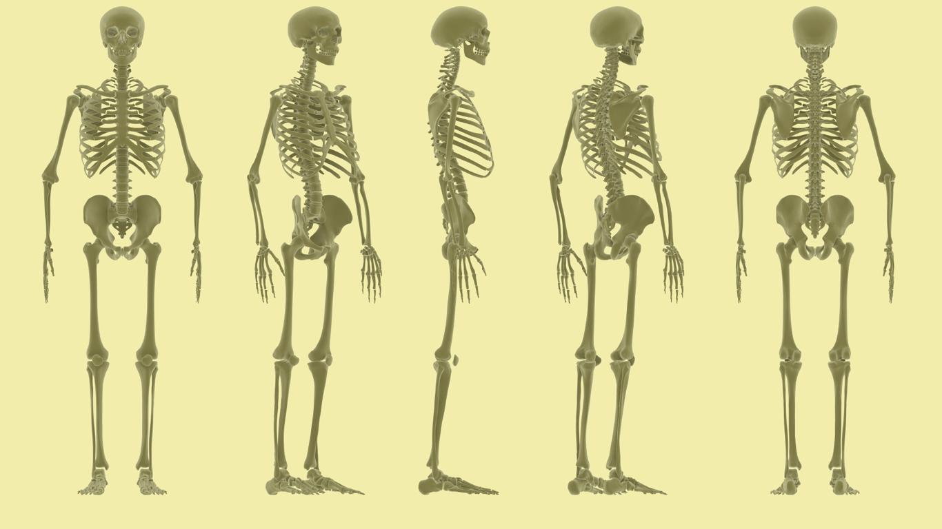 Wie viele Knochen hat ein Mensch?