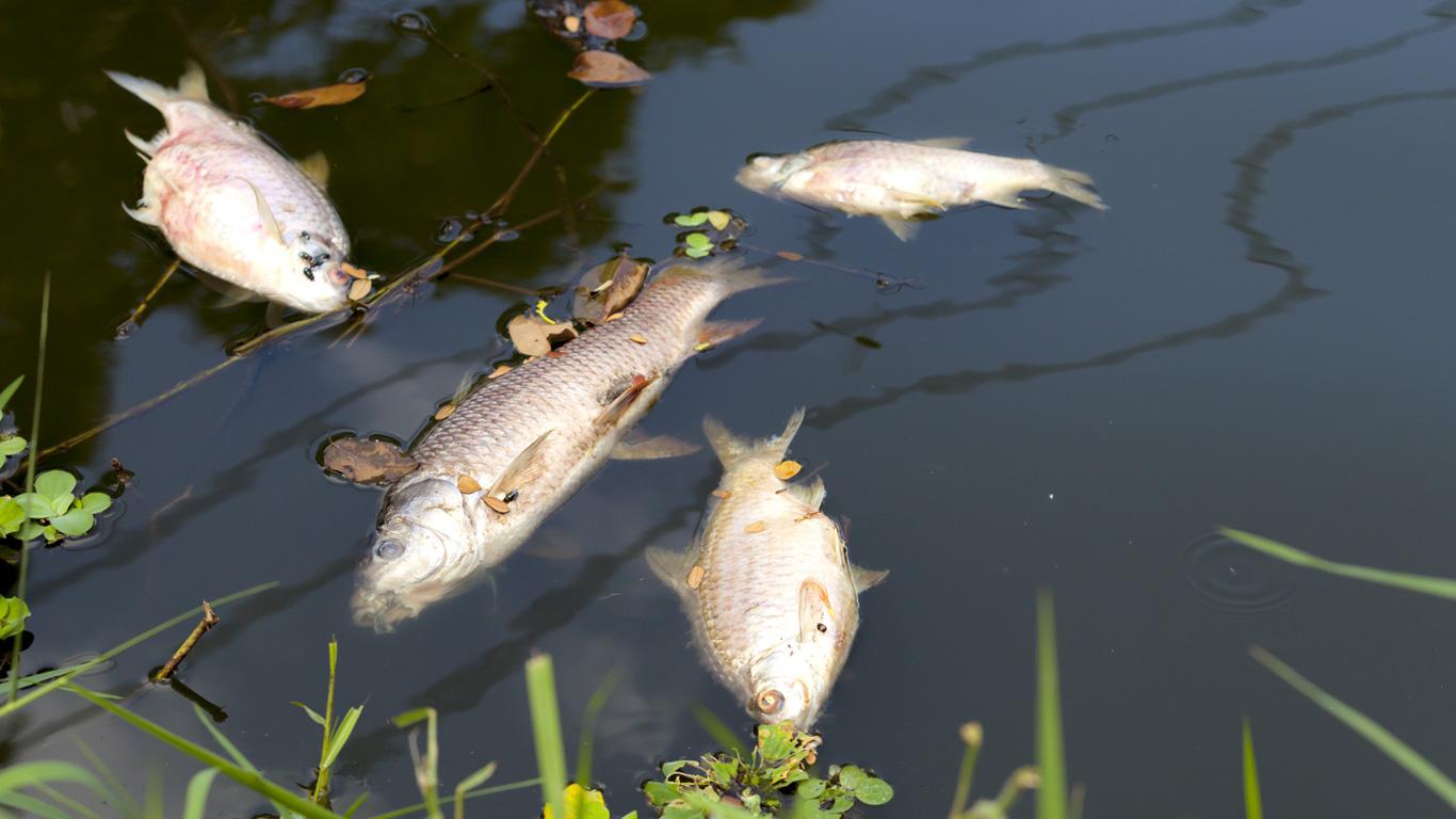 Was bleibt, wenn der Fisch verschwindet?