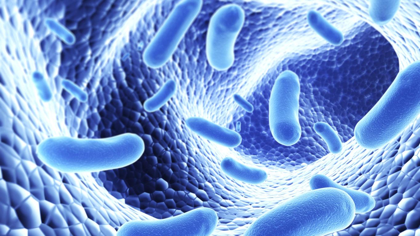 Probiotische Lebensmittel stärken das Immunsystem