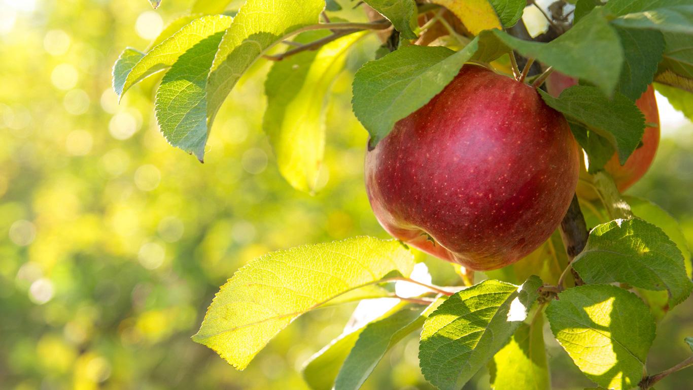 Das Apfel-Geheimnis