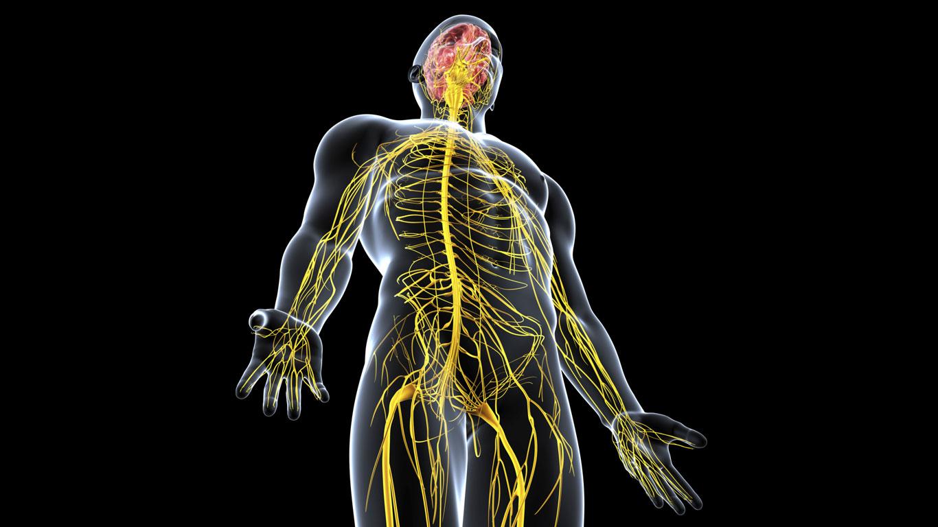 Welche Angriffsziele im Körper peilt die Droge an?