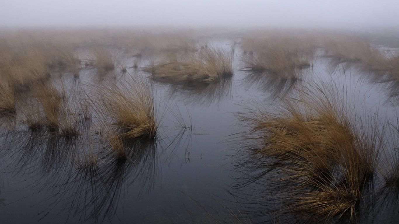 Heimat der Moorlichter – Domslandmoor, Windeby (Schleswig-Holstein)