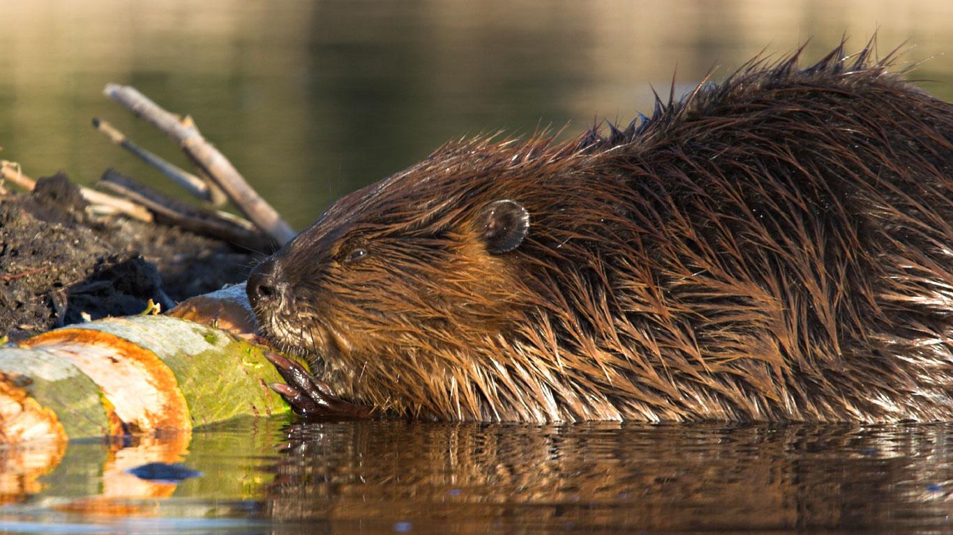 Bedrohte Tierarten in Europa