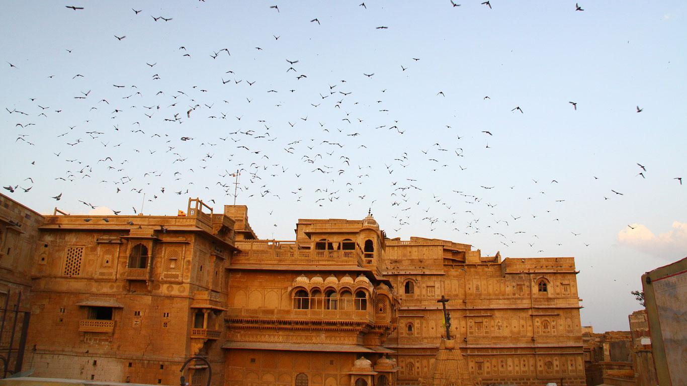 Wüstenschönheit trifft Indien