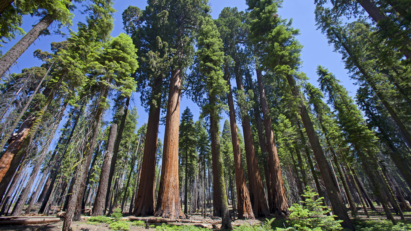 Heimat in der Sierra Nevada