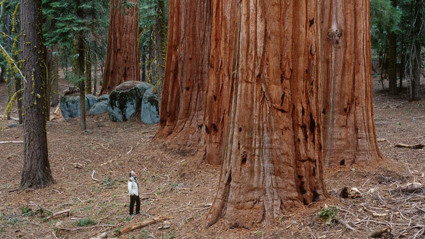 115 Meter Holz