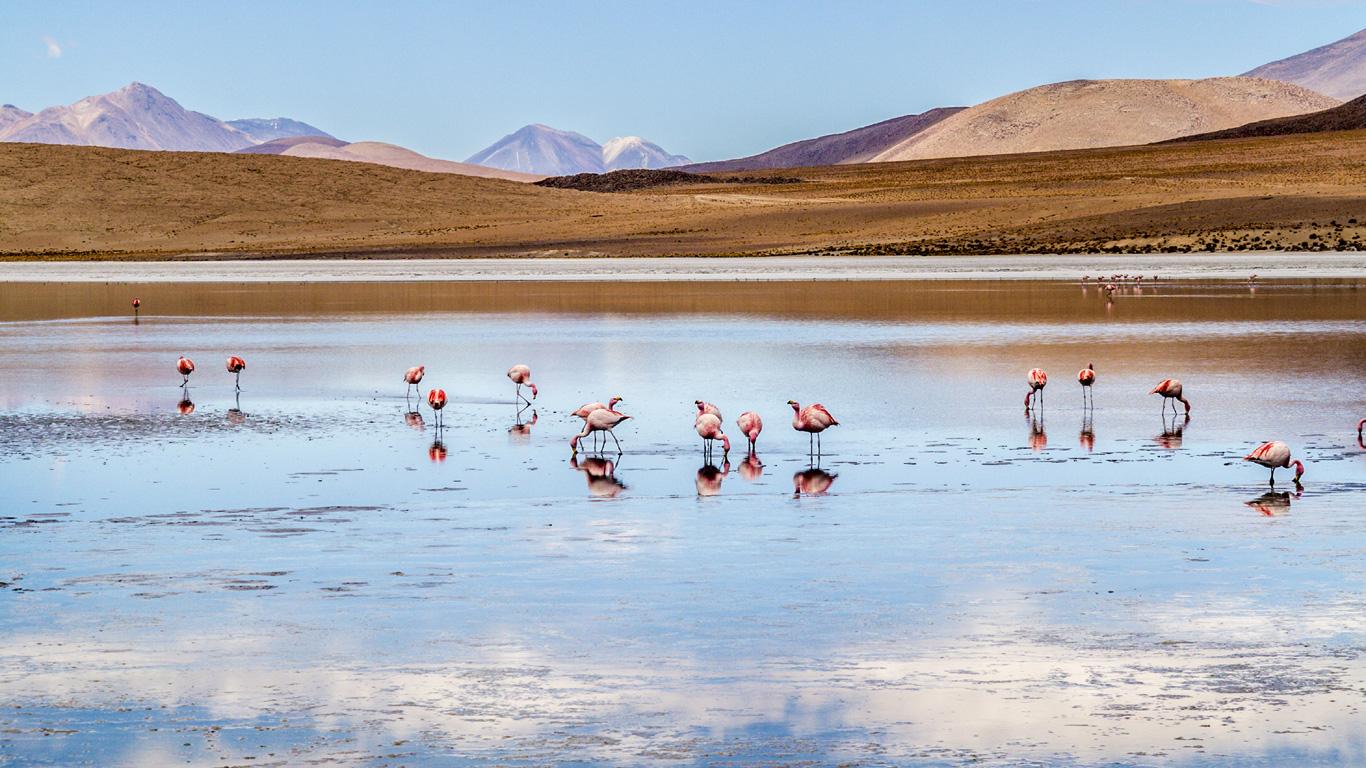 Atacama-Wüste (Chile)