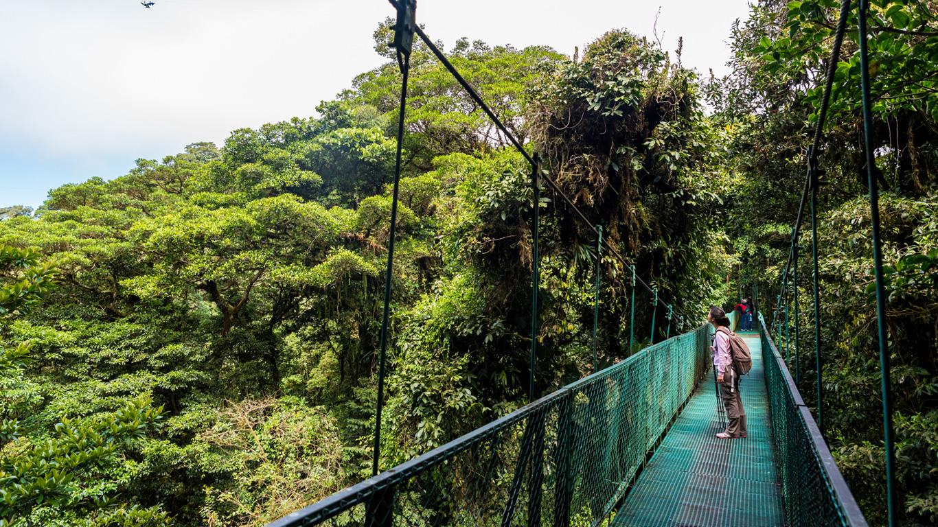 Monteverde: In den Baumkronen der Nebelwälder