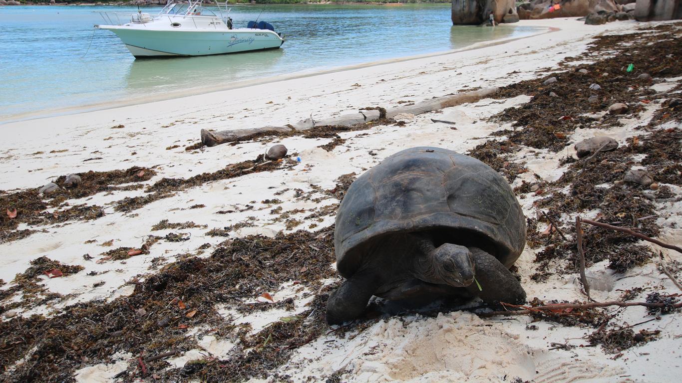 Heimat der Riesenschildkröte