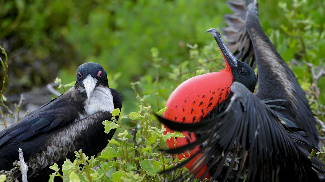 Paradies für Vögel