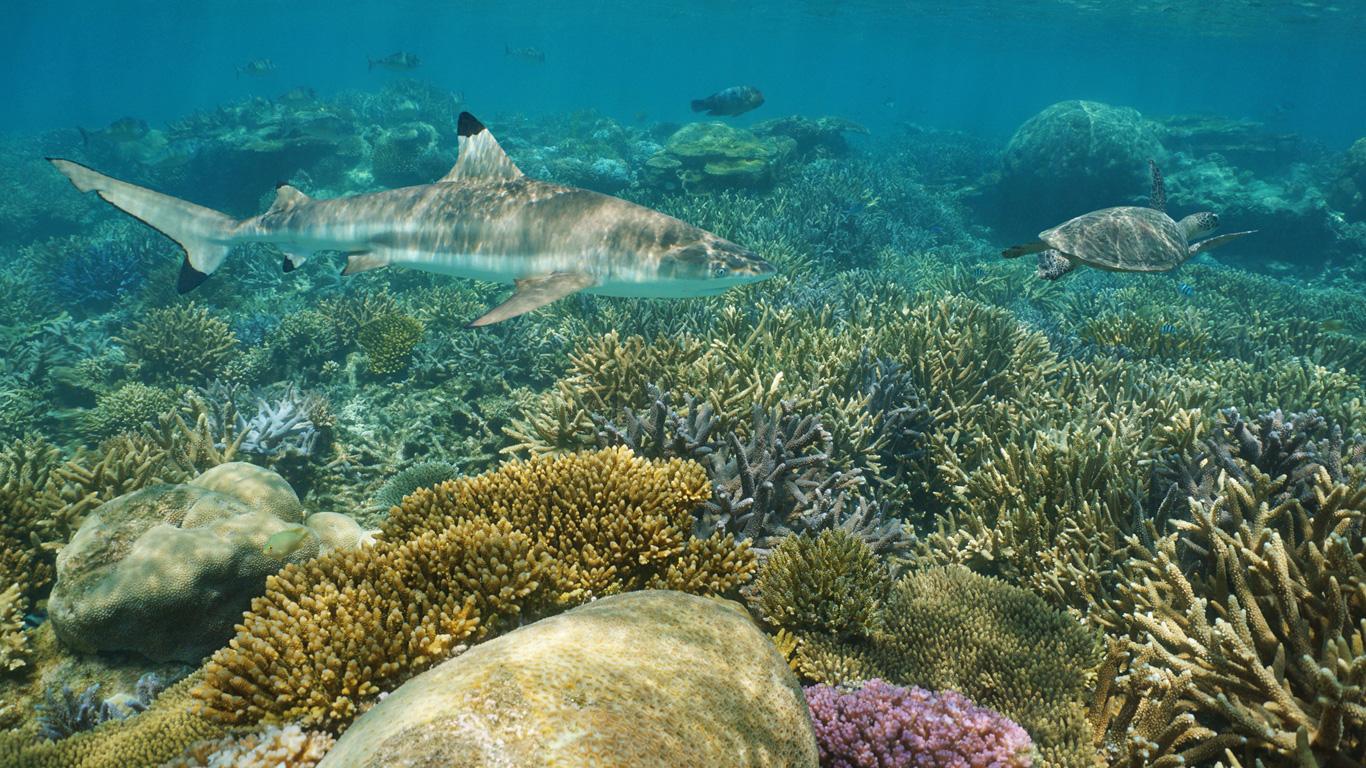Artenvielfalt in den Tiefen des Ozeans