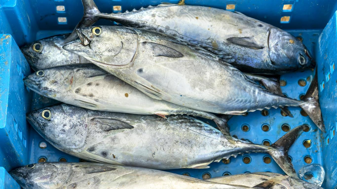 Weniger Fleisch und keine bedrohten Fischarten essen