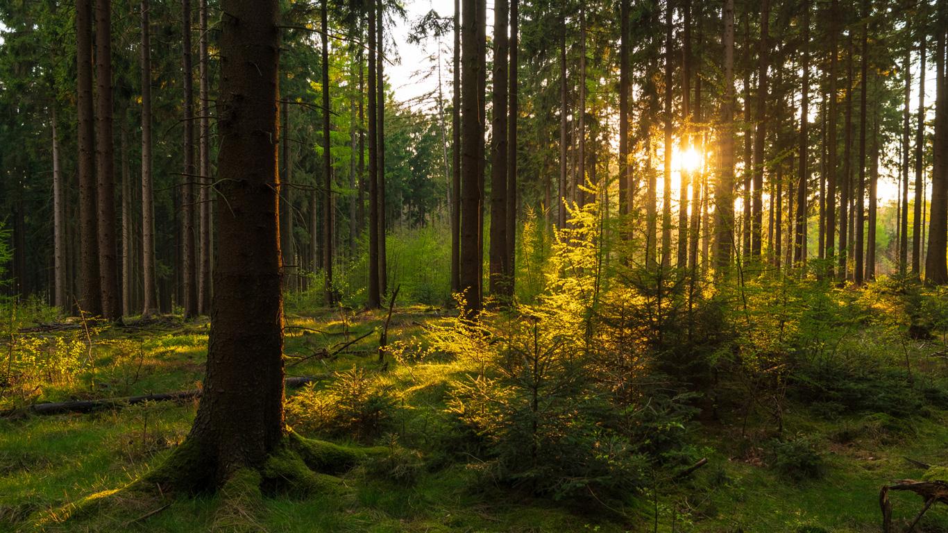 Zertifiziertes Holz und Recyclingpapier