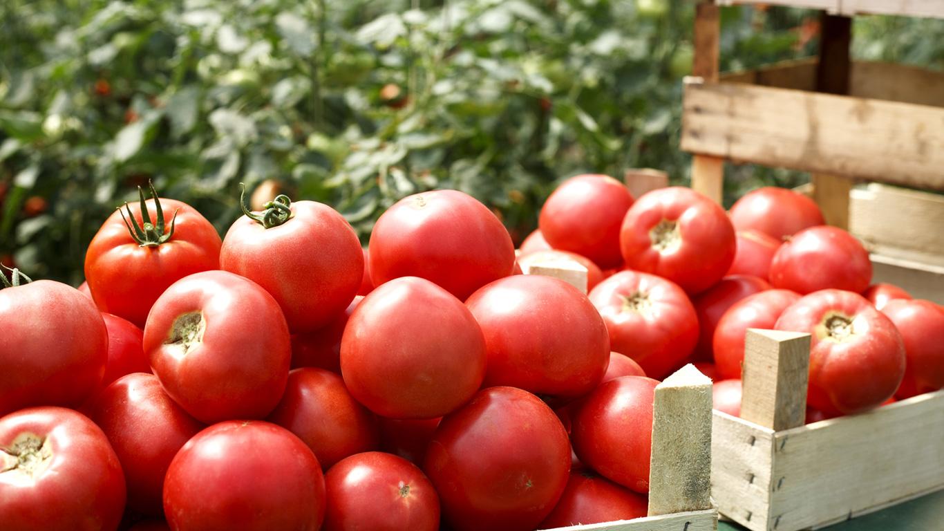 1 Kilo Tomaten – 184 Liter Wasser
