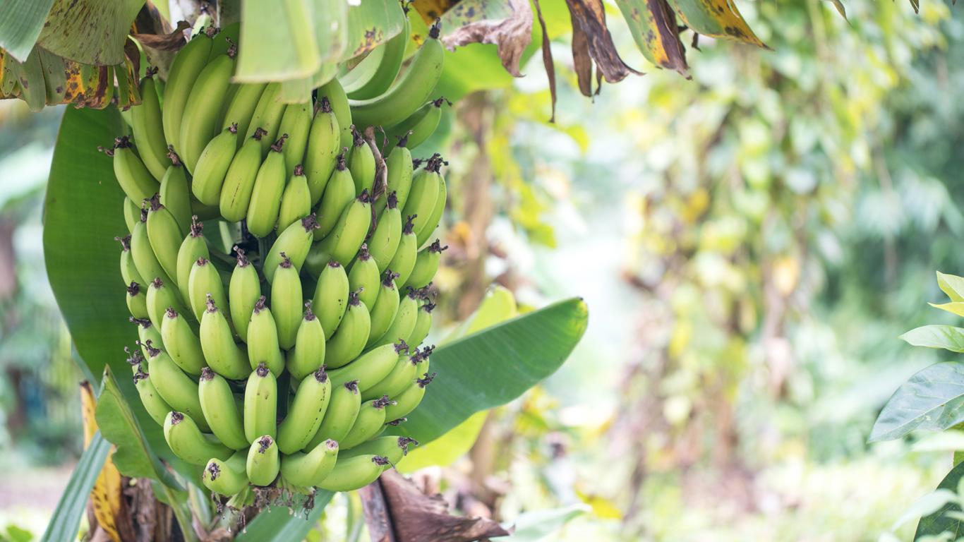 1 Kilo Bananen – 859 Liter Wasser