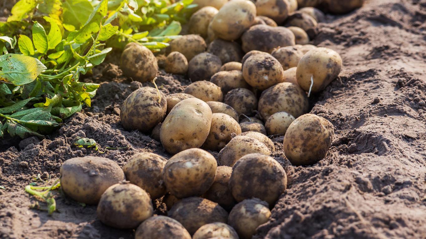 1 Kilo Kartoffeln – 255 Liter Wasser