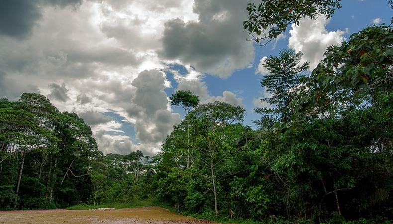 Ölrausch im Regenwald